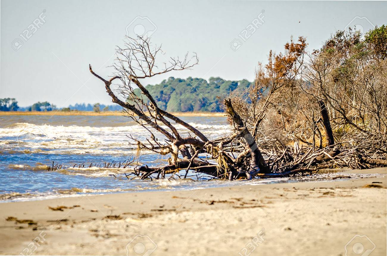 beach scenes around folly beach south carolina stock photo, picture