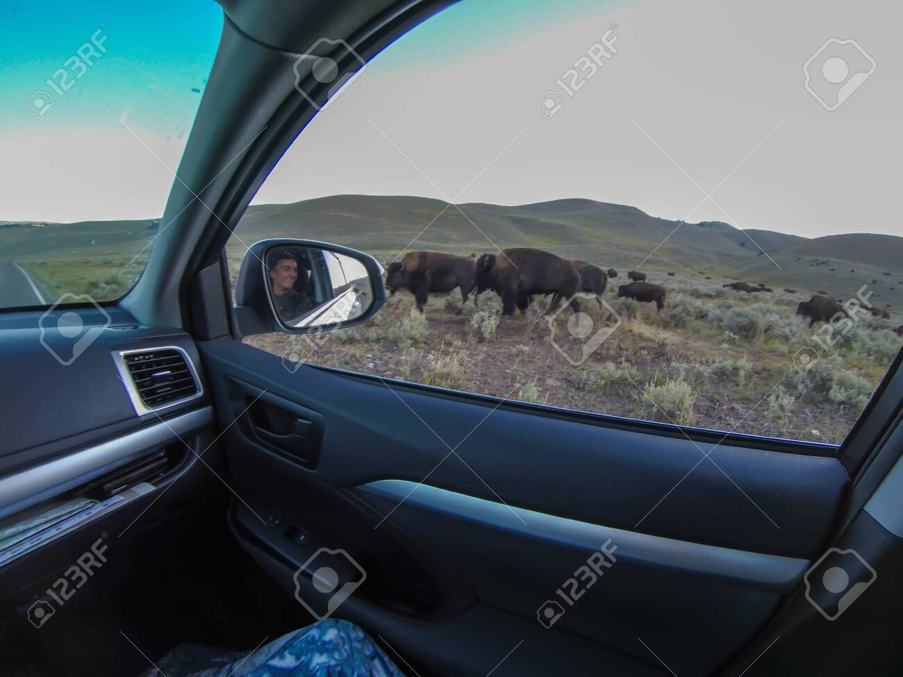 American Bison Grazing by Roadside With Passing Cars - 131966586