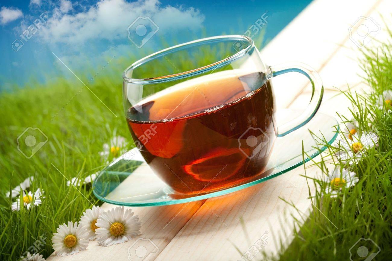 Tea cup Stock Photo - 10472422