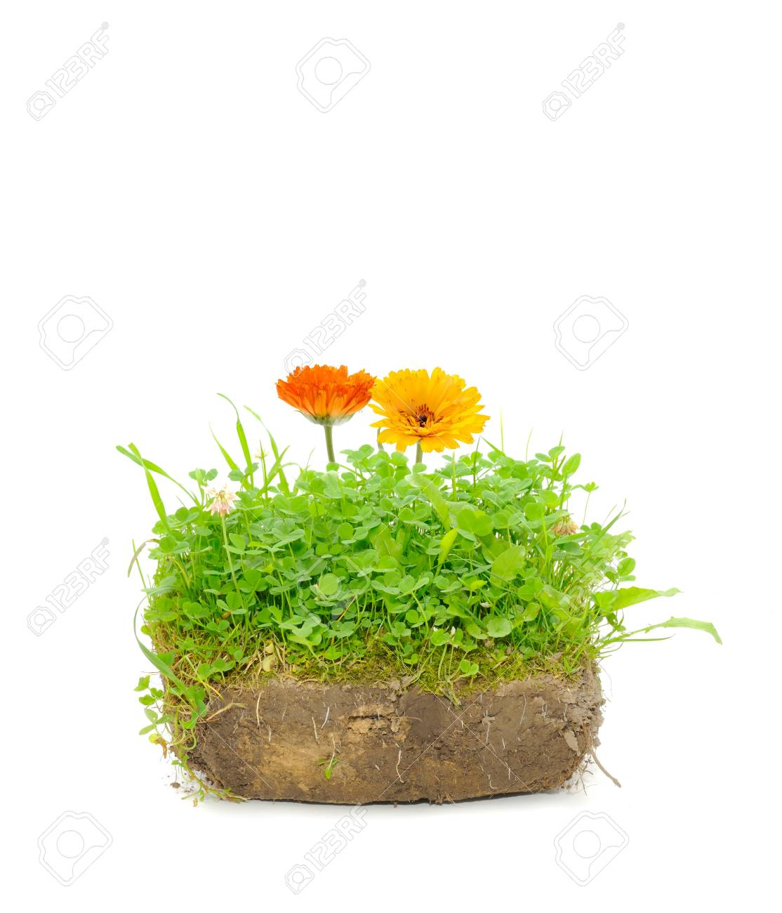 Green Plants and Calendula Flowers in Soil Isolated on White Background Stock Photo - 9999037