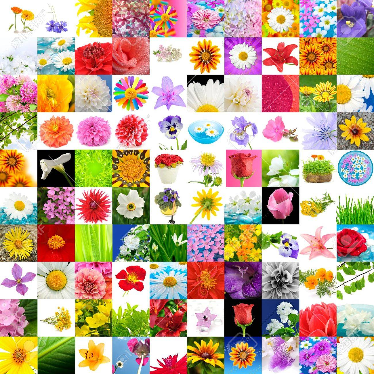 big collection of flowers set of 100 images stock photo picture