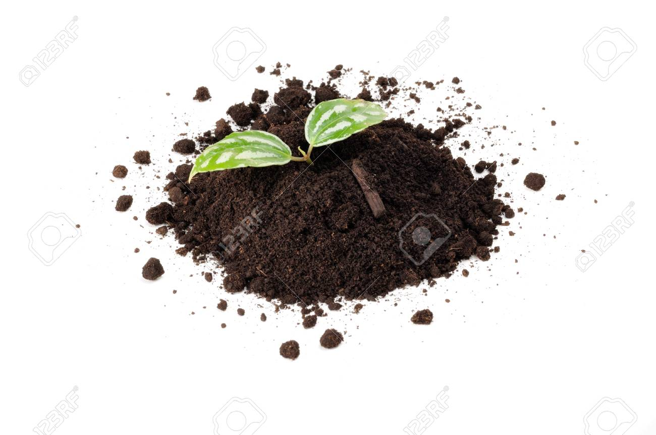Green Plant in Pile of Soil Isolated on White Background Stock Photo - 14573208