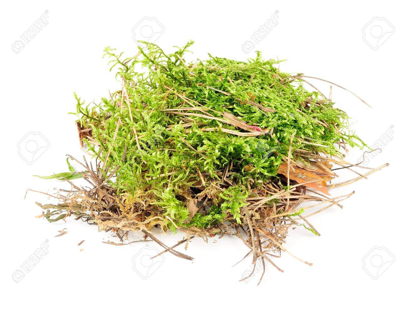 Clump of Green Moss Isolated on White Background Stock Photo - 15359303