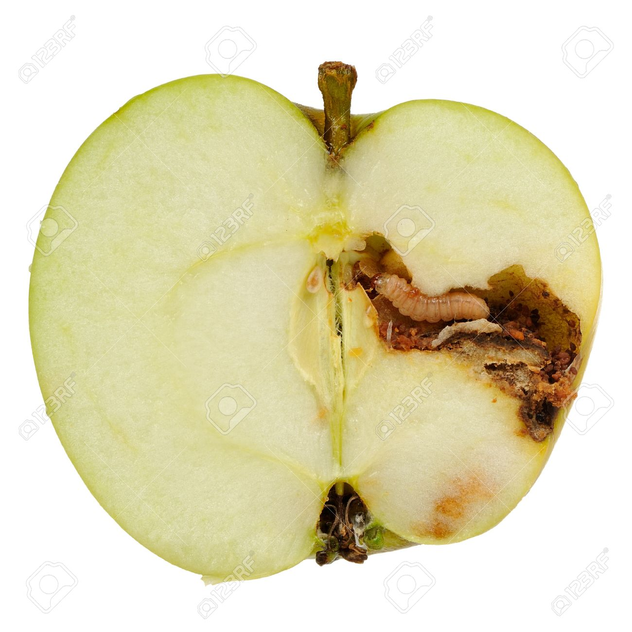 A Worm Apple Maggot Larva Eating An Apple Cut In Half Isolated