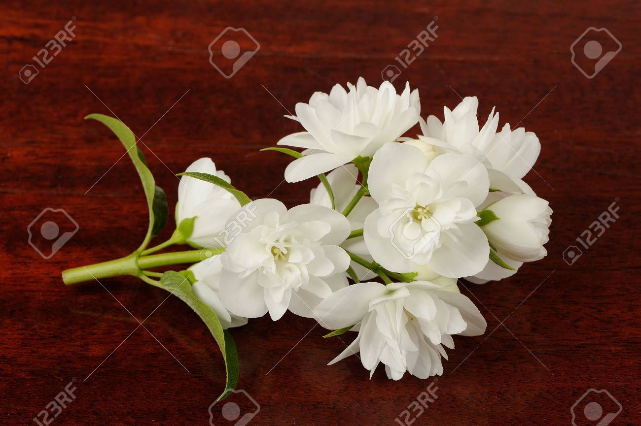 Branch Of Jasmine Flowers On Wood Background Stock Photo Picture