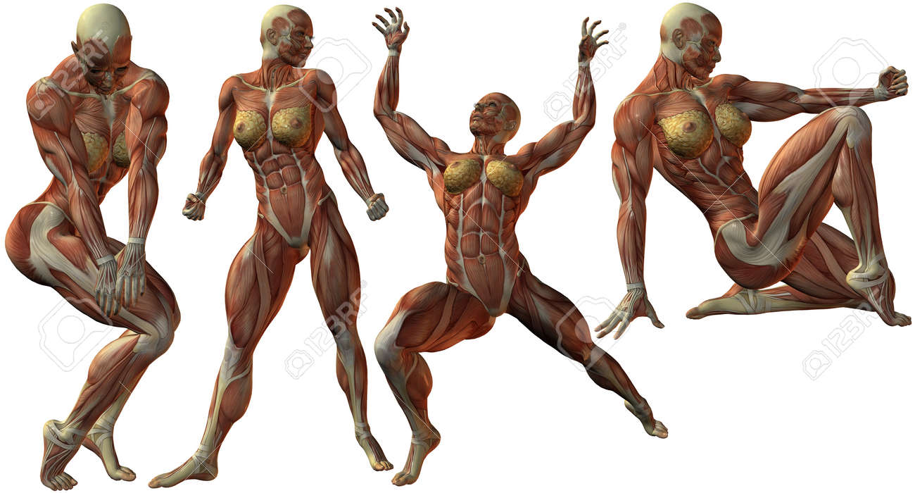 Female Human Bodybuilder Anatomy Stock Photo Picture And Royalty