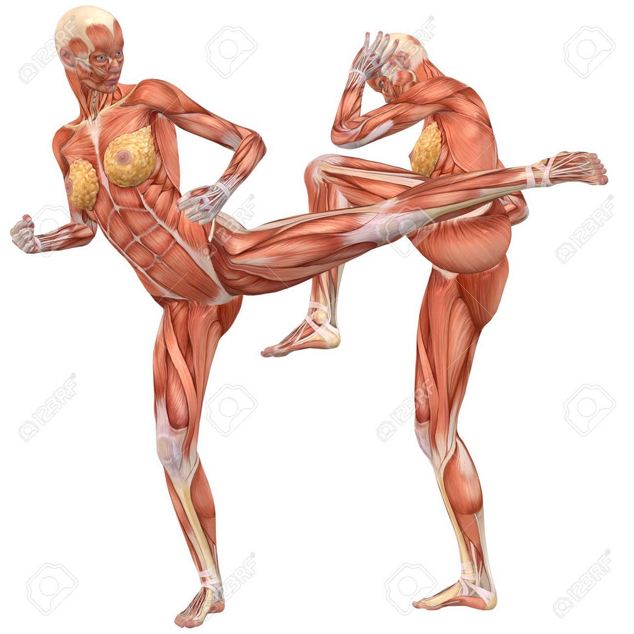 El Cuerpo Humano Femenino Anatomía-Street Fight Fotos, Retratos ...