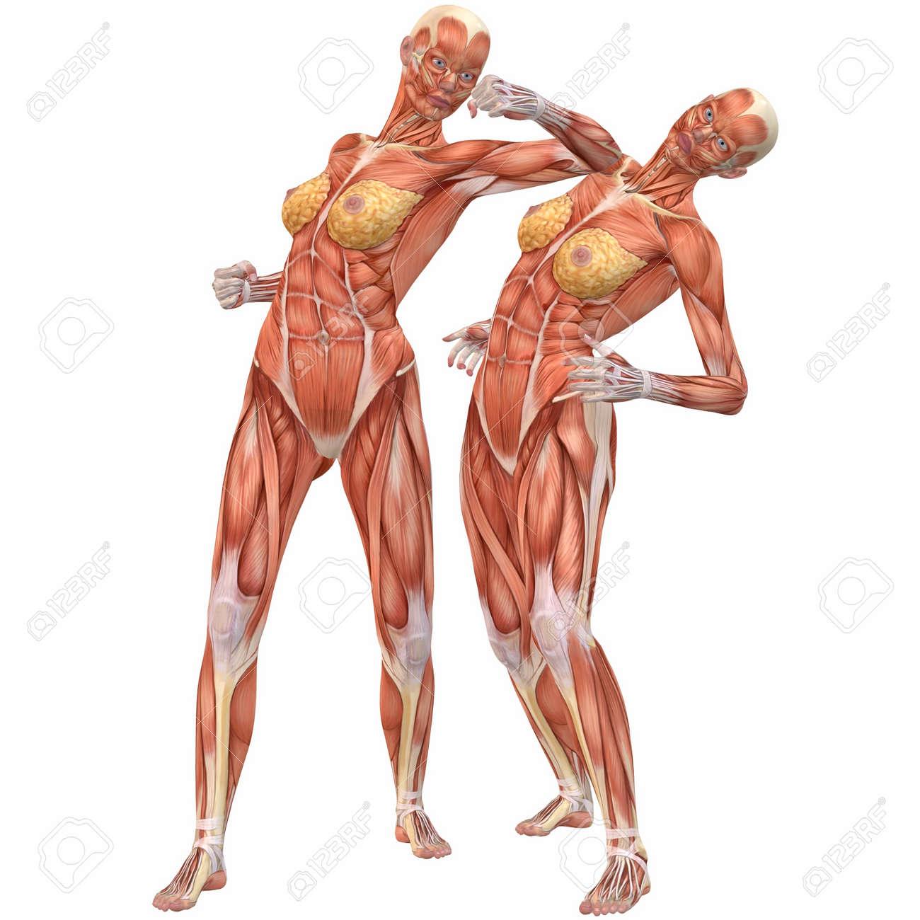Hombre El Cuerpo Humano Anatomía-Street Fight Fotos, Retratos ...