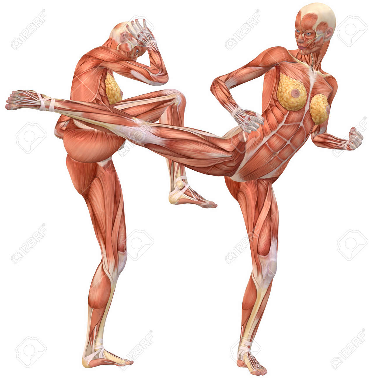 Female Human Body Anatomy Street Fight Stock Photo Picture And Diagram 4115601