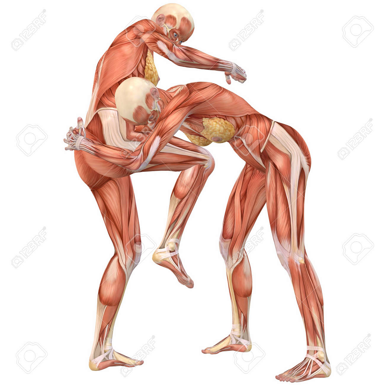 Female Human Body Anatomy Street Fight Stock Photo Picture And