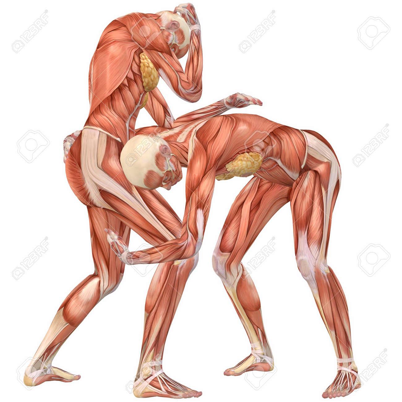 Anatomie-Street Fight Frau Menschlichen Körper Lizenzfreie Fotos ...