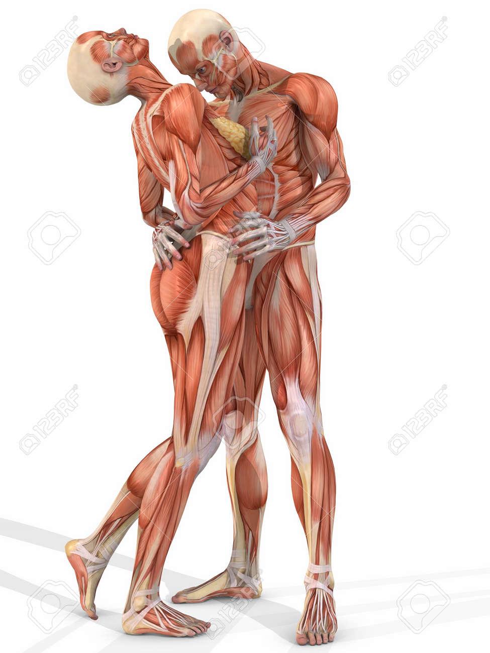 porno-anatomiya-cheloveka