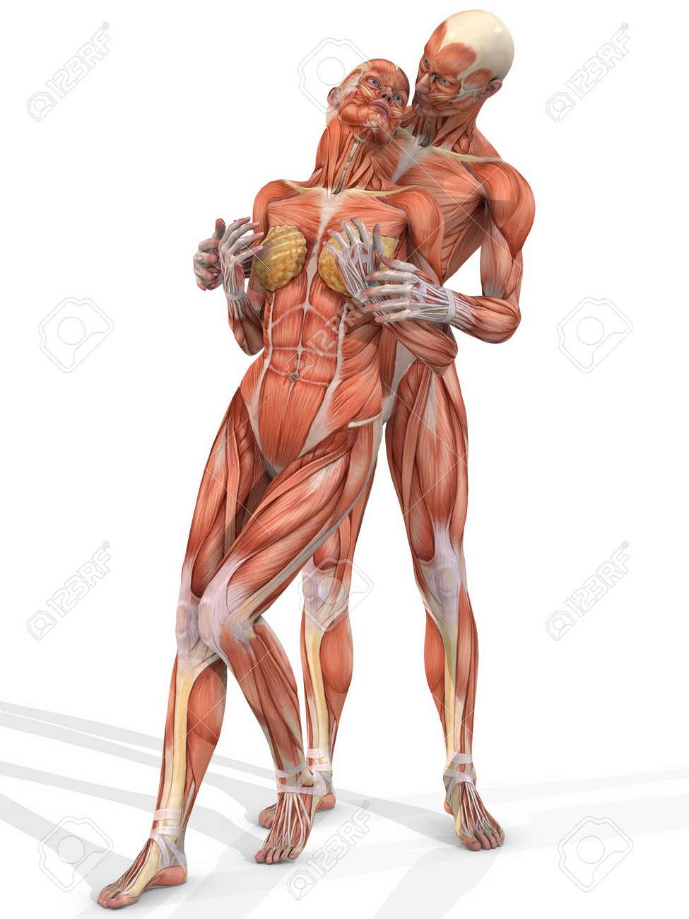 Weibliche Und Männliche Anatomie Körper - Zu Zweit Lizenzfreie Fotos ...