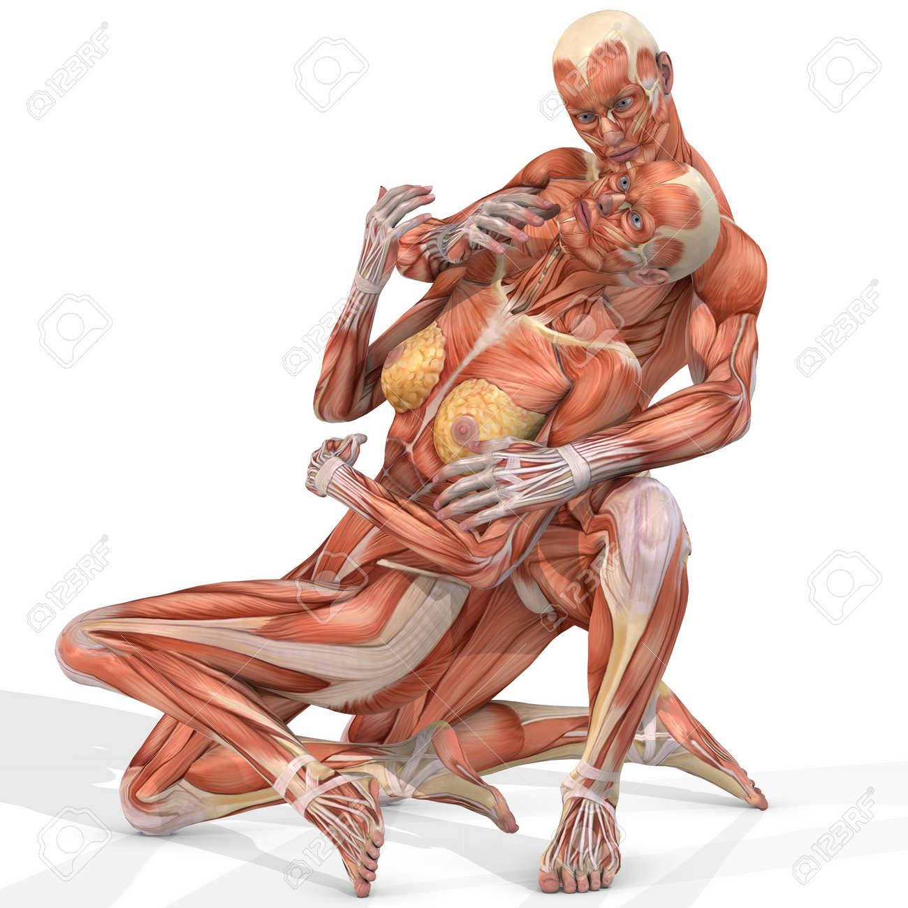 Diagram Of The Female Body Anatomy Organ Human Lower Internal