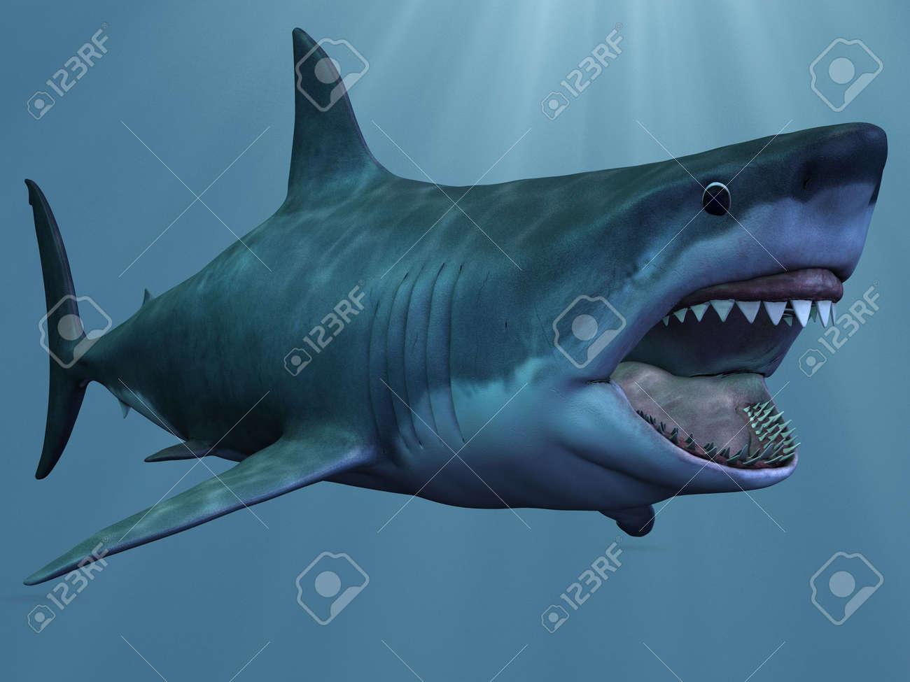 Great White Shark Stock Photo - 6614016