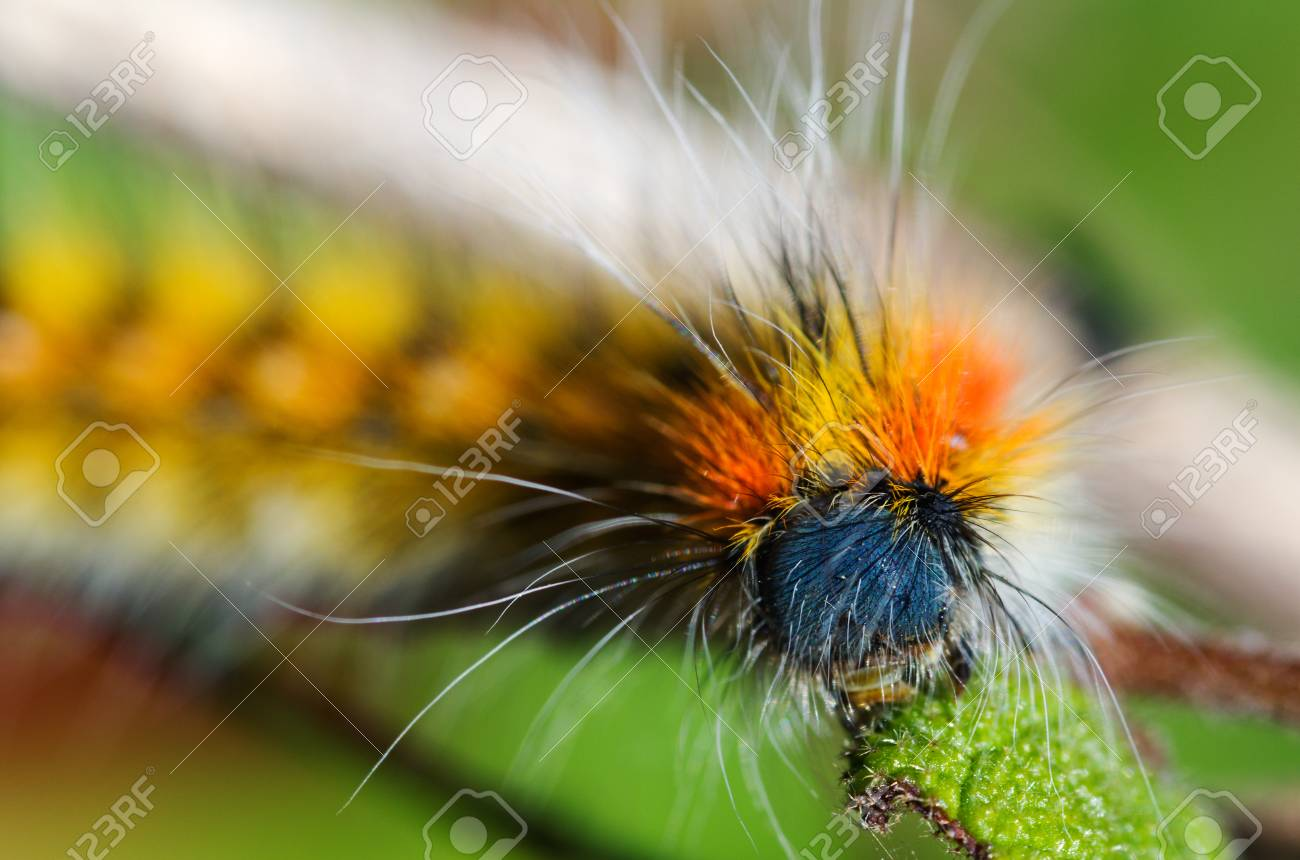 Caterpillar head and bristles detail  Colourful and out of focus
