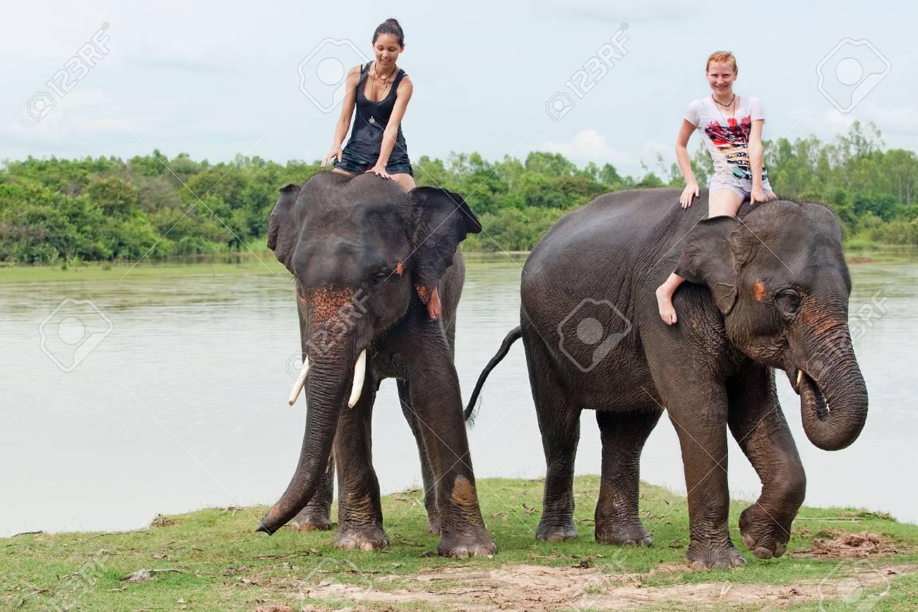 ride an elephant - 7686238