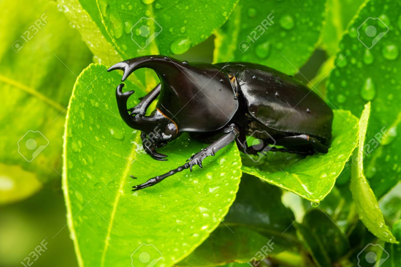 close up of animal sit on leaf with raindrops - 114825803