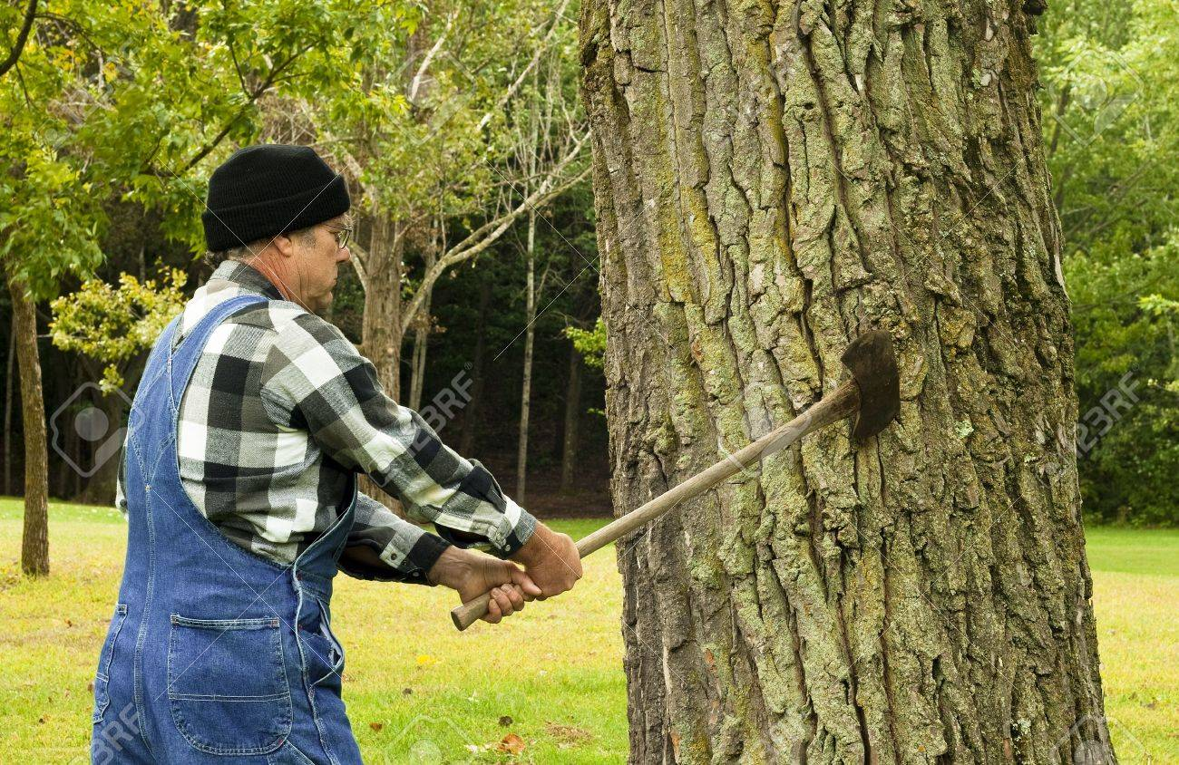 man preparing to chop down a tree with an old double blade axe Stock Photo - 7811898