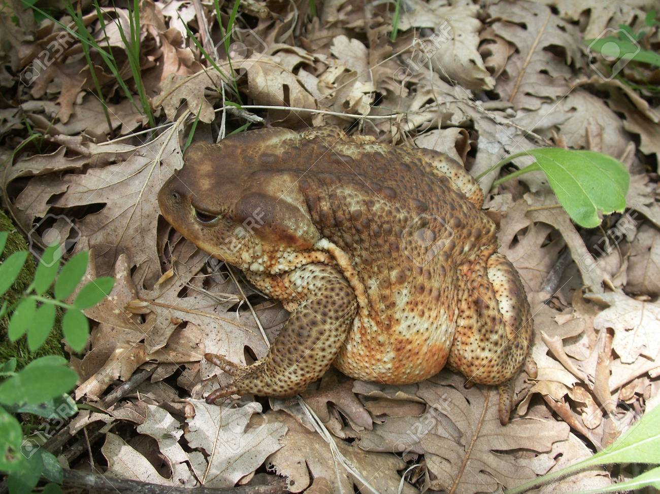 frog Stock Photo - 2704903