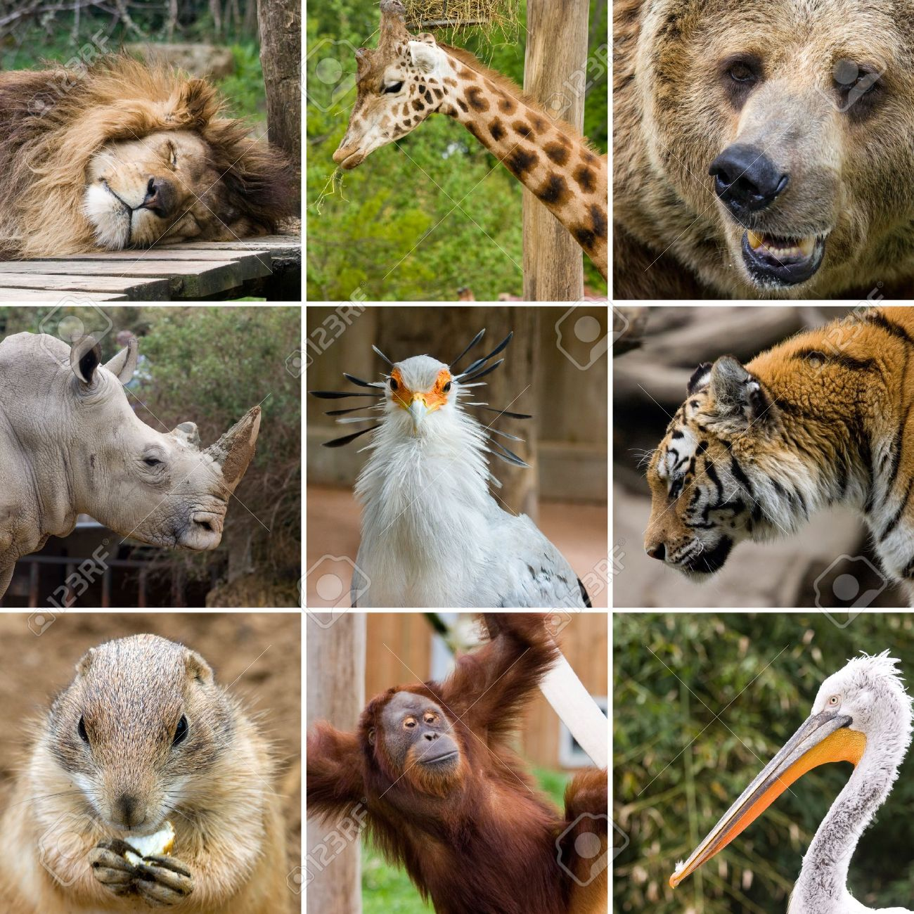 Collage Photo Composition Of Some Wild Animals Stock