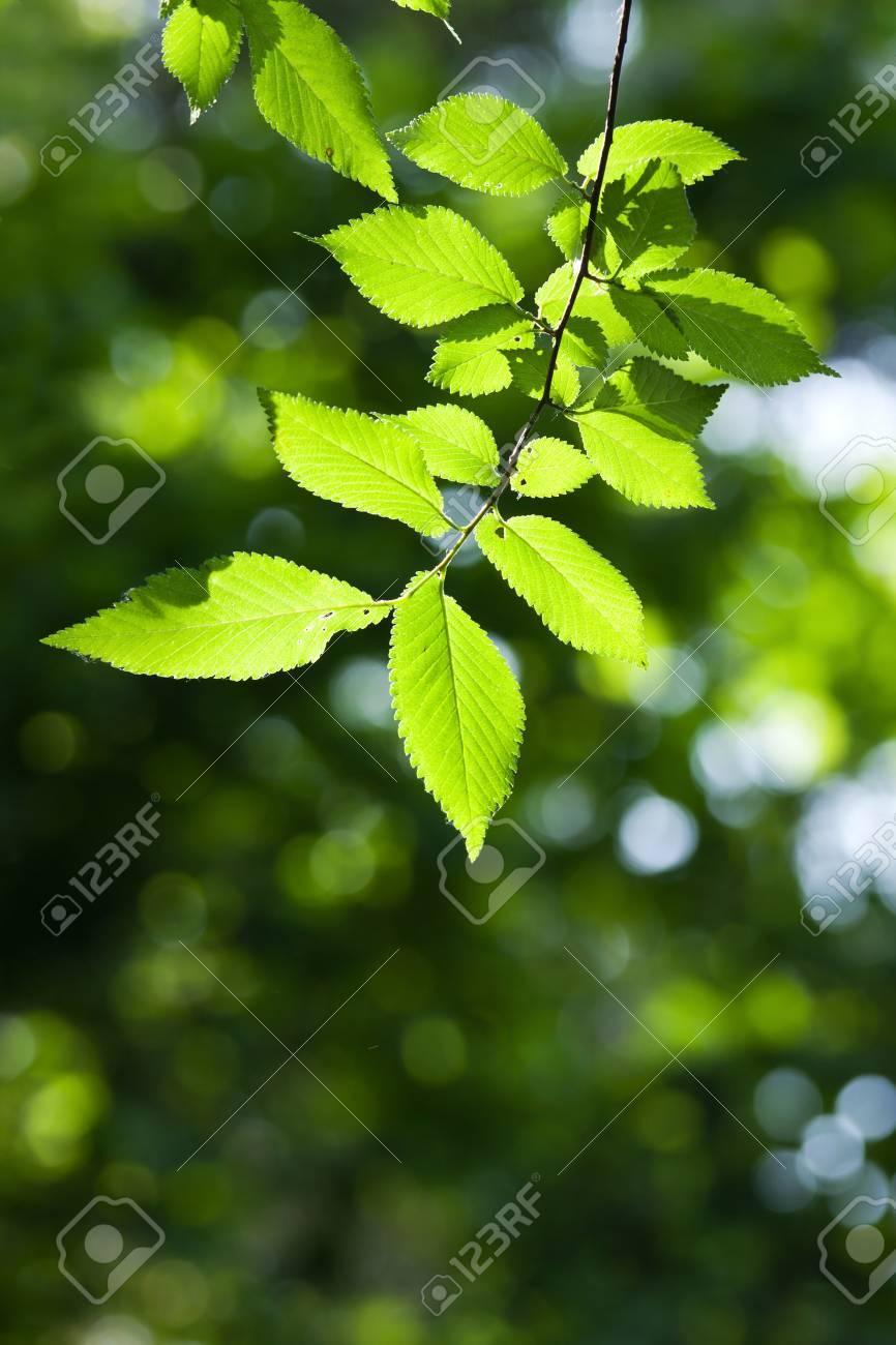 Beautiful, harmonious forest detail Stock Photo - 8464015
