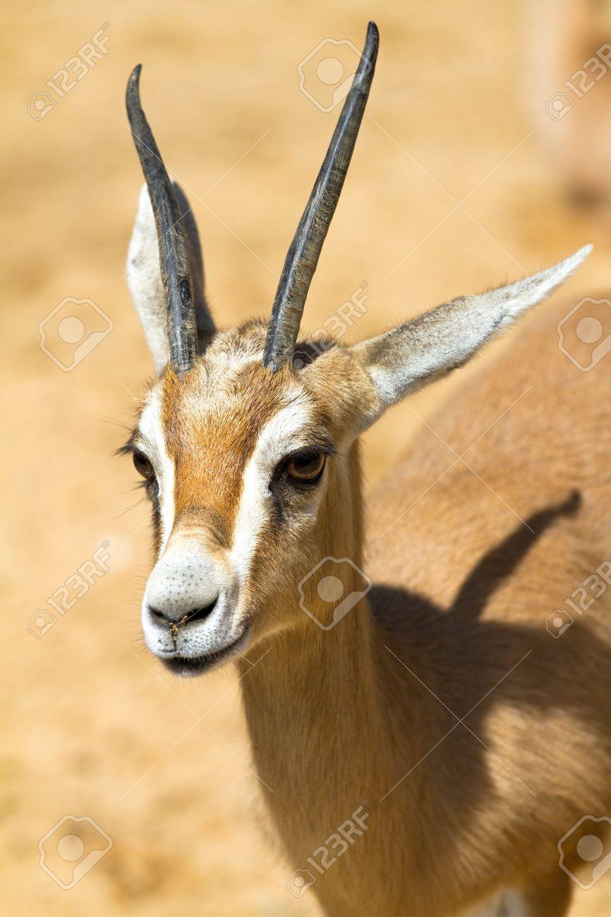 De antilopes africanos fotos +50 ANIMAIS