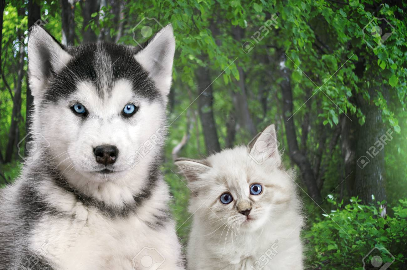Most Beautiful Blue Eyed Cats and Dogs