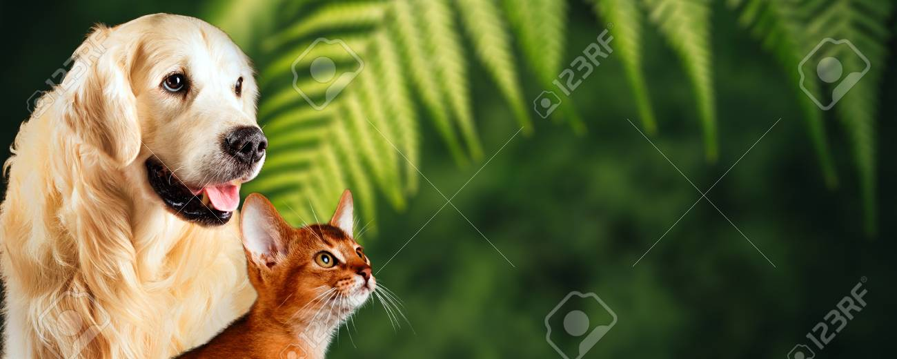 Cat and dog, abyssinian cat, golden retriever together on natural green background. Nice concept for represent healthy food or vitamins for pets. - 102663983