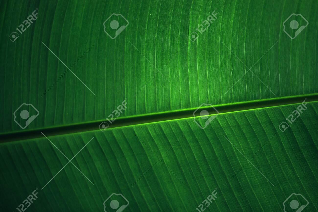 banana leaf wallpaper desktop