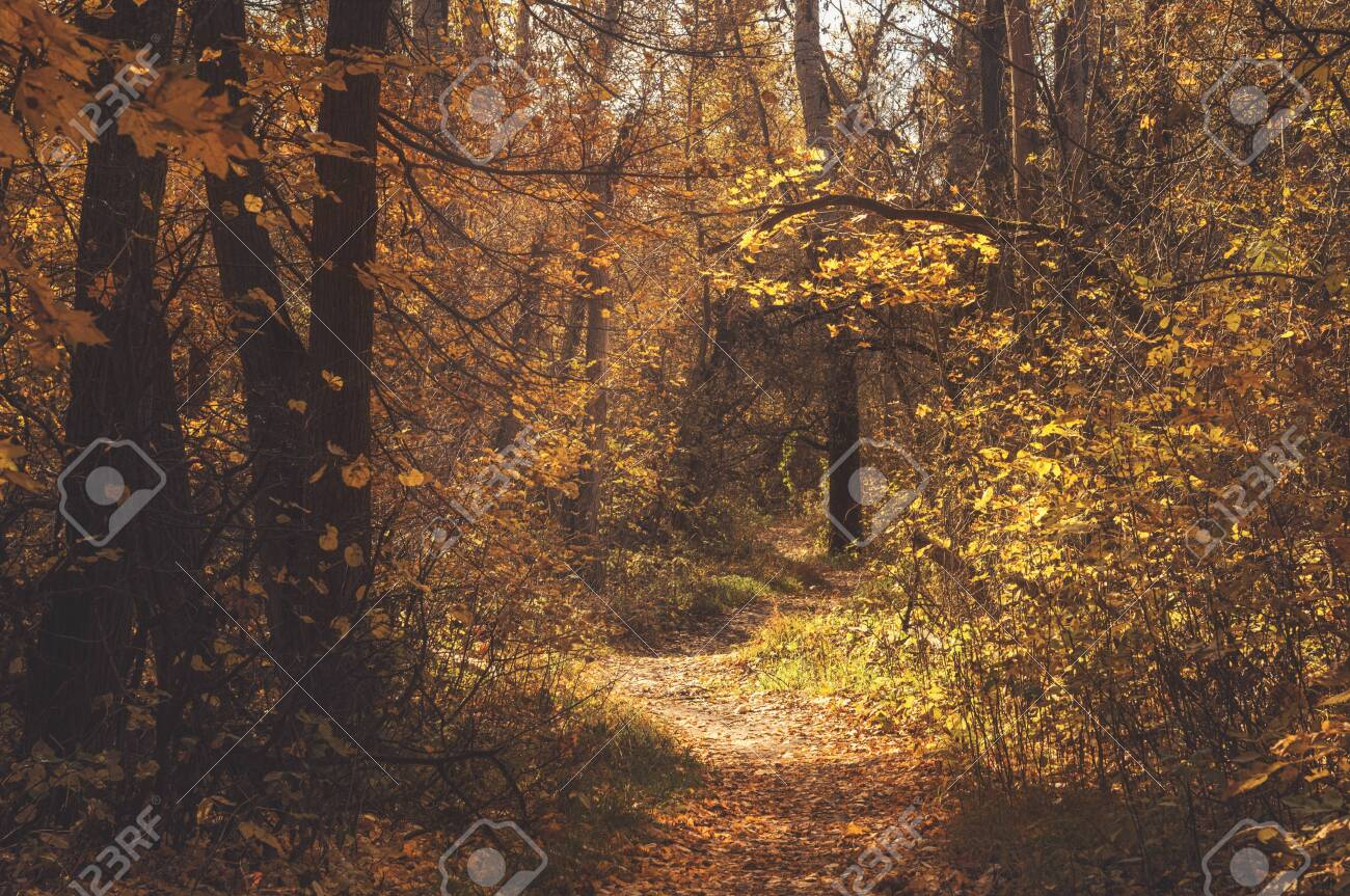 Autumn path trail in the scenic picturesque forest. Mood fall landscape - 131707158