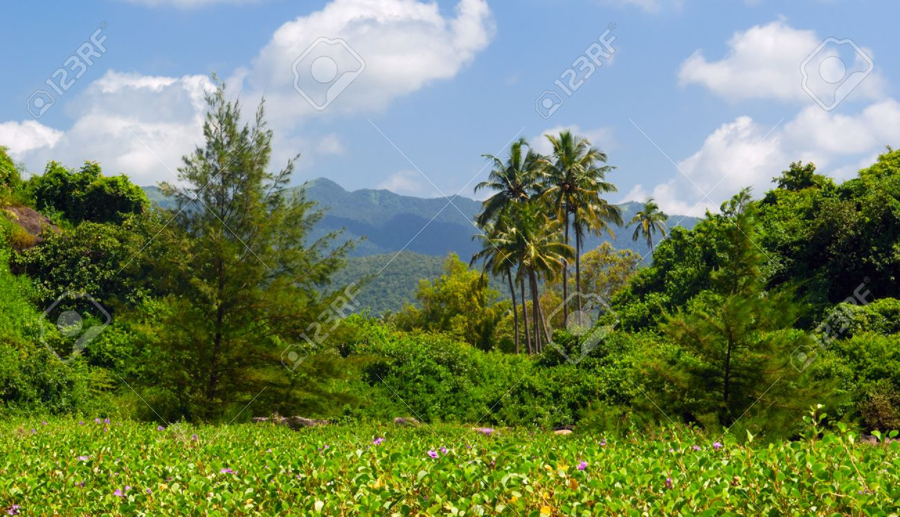Tropical Landscape Near Palolem Beach . South Goa. India Stock Photo    17885412