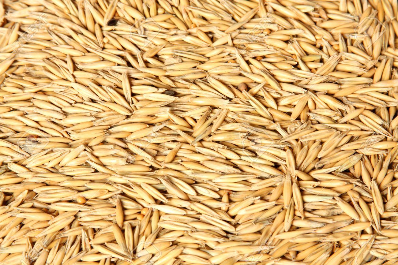A Texture of oats seeds - 4595473