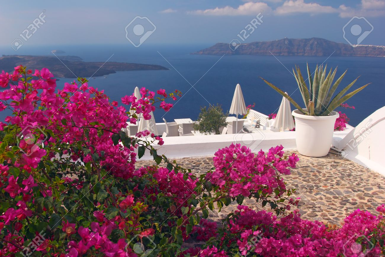 A nice terrace in Santorini island with bougainvillea flowers and the view over the caldera Greece - 29045296