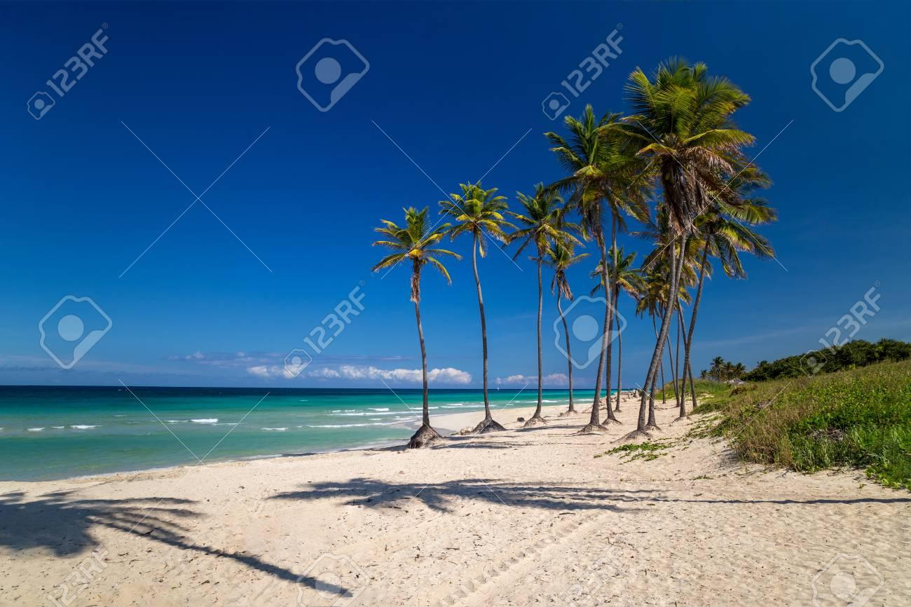 Palm trees on a paradise beach. Cuba, the Caribbean - 115409178