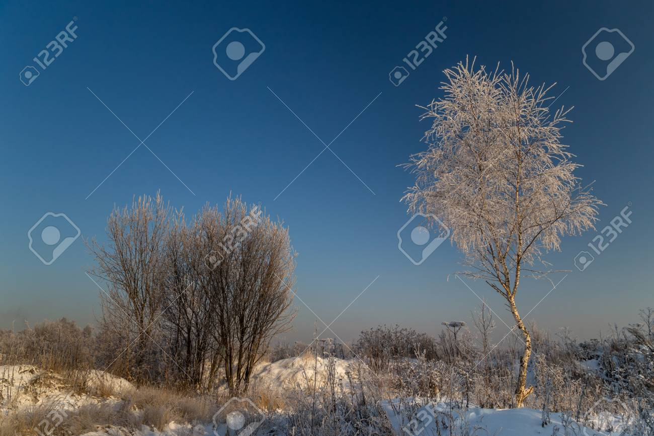 Trees covered with hoarfrost on a sunny winter day - 115409716