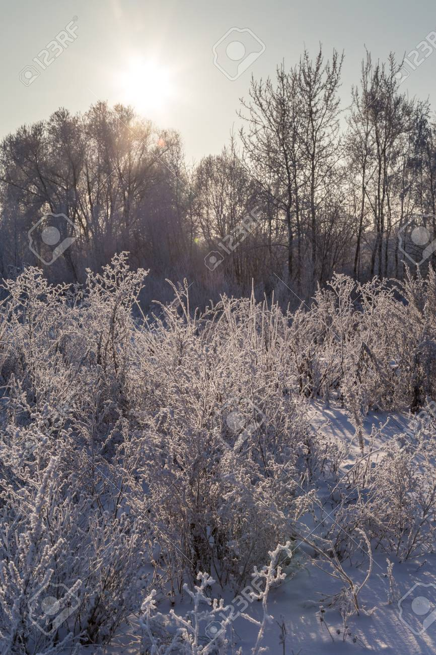 Winter landscape. Dry plants covered with hoarfrost shining in the sun - 115410242