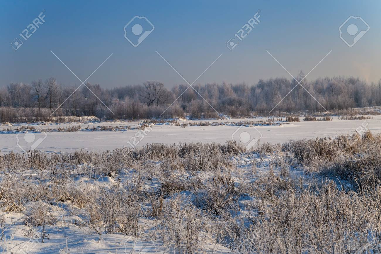 Winter landscape. Plants and trees covered with hoarfrost - 115410310