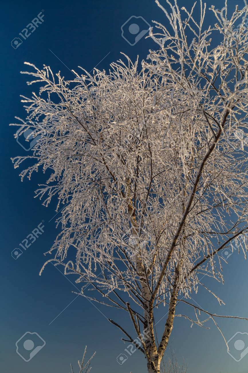 Trees covered with hoarfrost on a sunny winter day - 115410330