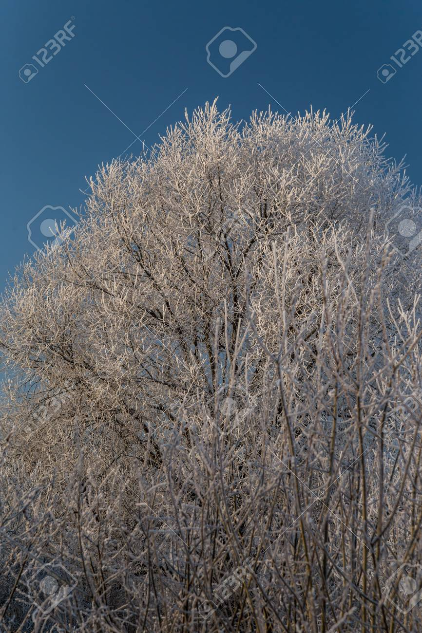 Trees covered with hoarfrost on a sunny winter day - 115410354