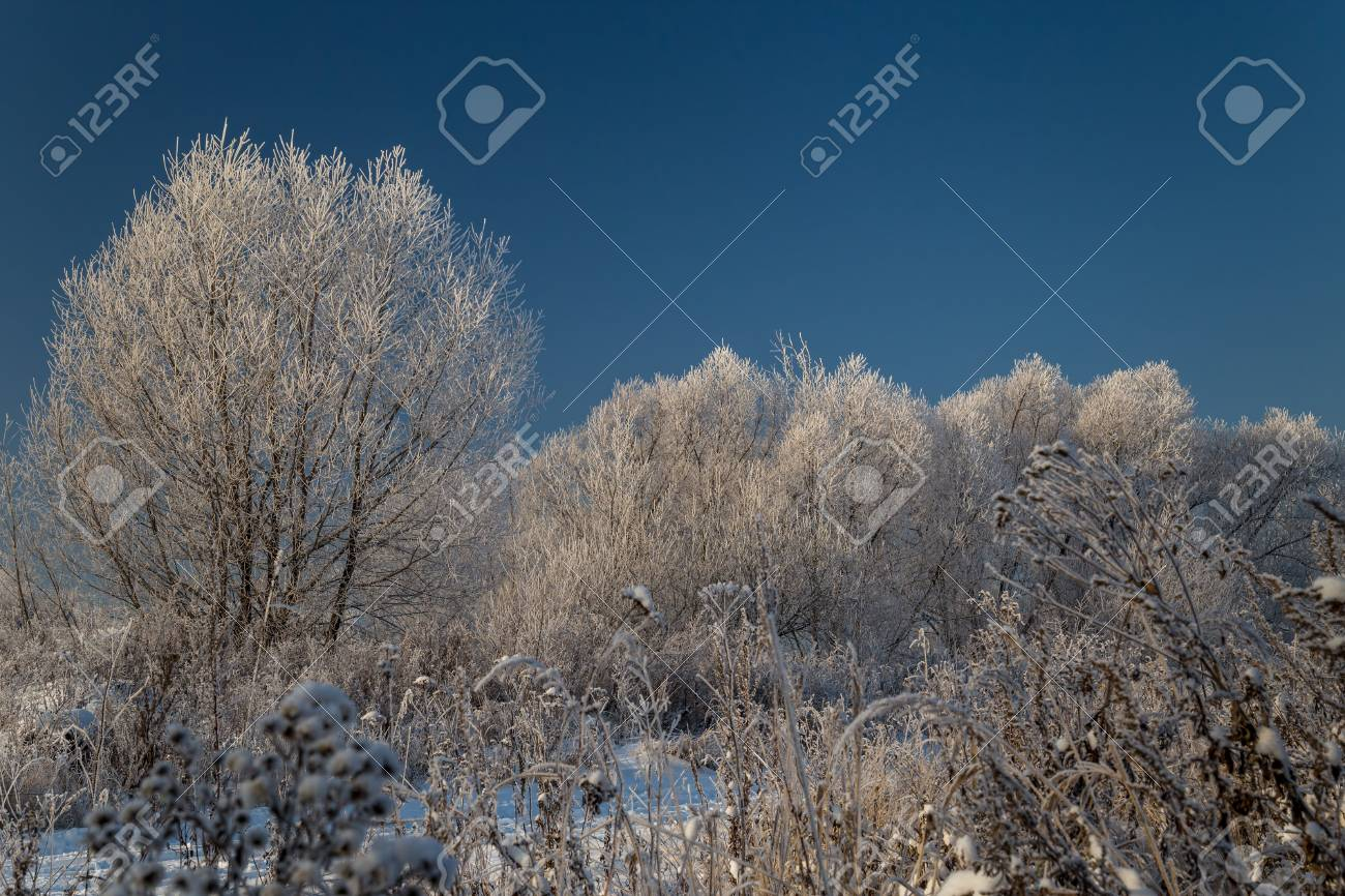 Trees covered with hoarfrost on a sunny winter day - 115410363