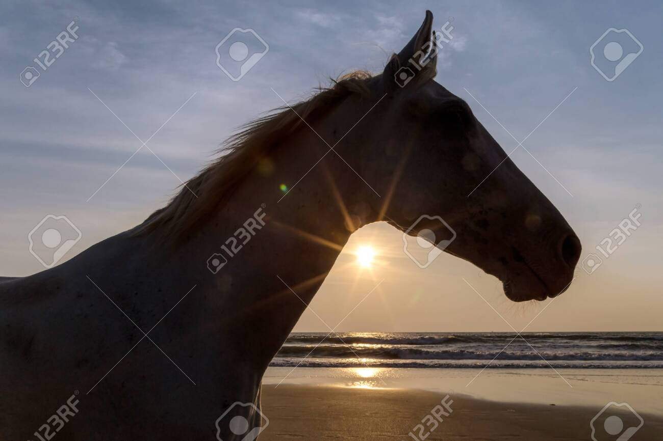 Silhouette of a horse on a beach at the sunset - 115410371