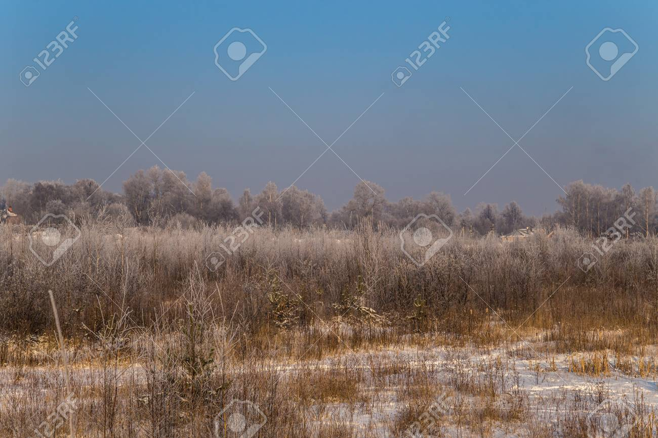 Winter landscape. Plants and trees covered with hoarfrost - 115410407