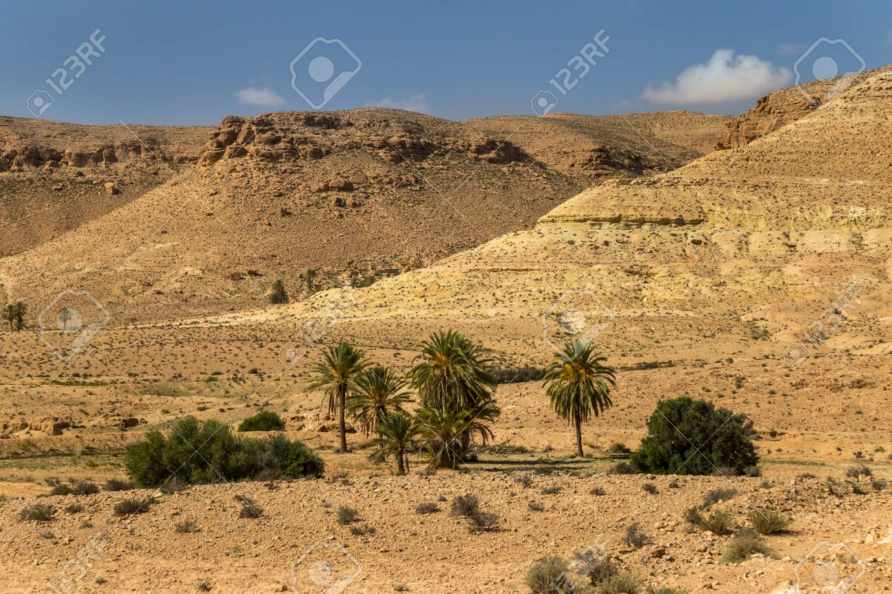 Oasis in a desert. South Tunisia - 127056638