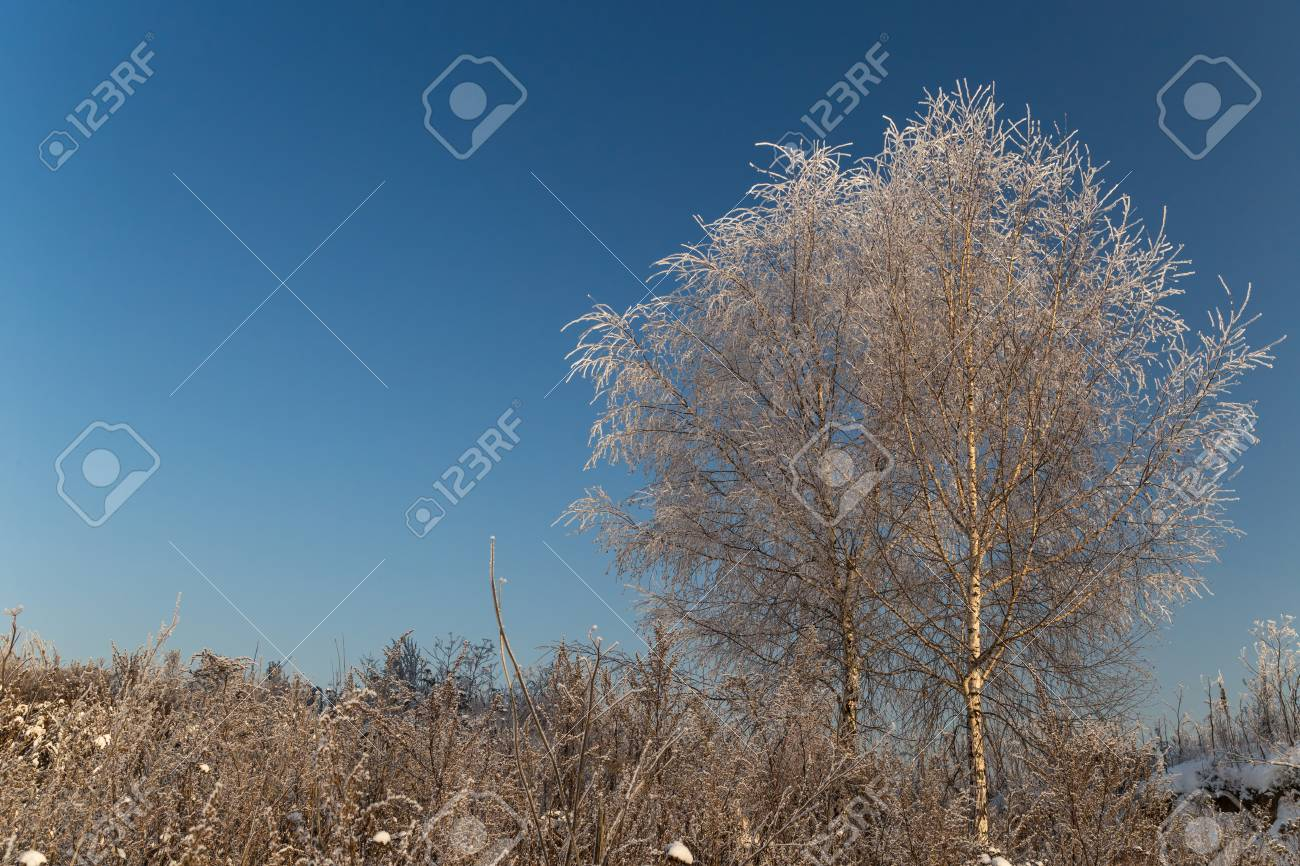 Trees covered with hoarfrost on a sunny winter day - 127056837