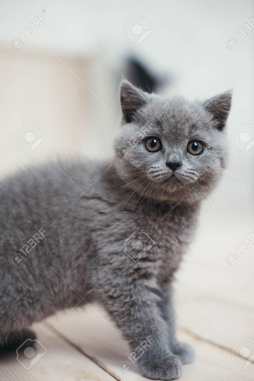 Cute gray kitten in wicker basket isolated on white - 50799382