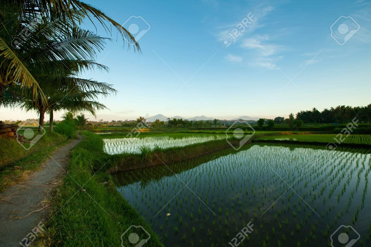 Rice terraces at sunrises in Ubud on Bali island, Indonesia Stock Photo - 13110943