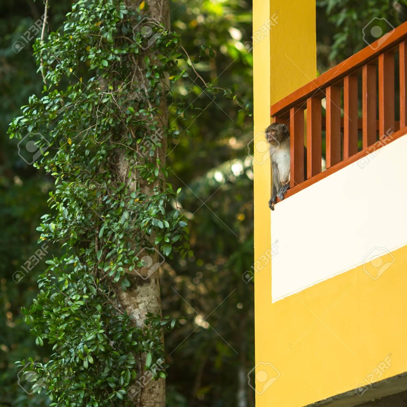 El Pequeño Mono En La Terraza De La Casa El Sudeste De Asia