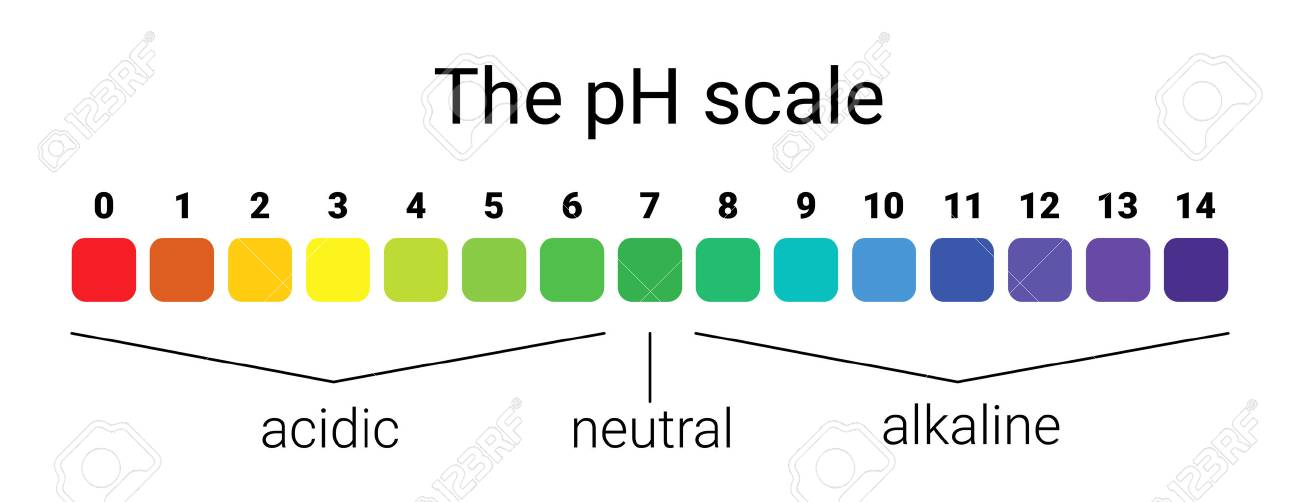 ph scale. infographic acid-base balance. scale for chemical analysis acid base. vector illustration. colorful graph for test - 88834402