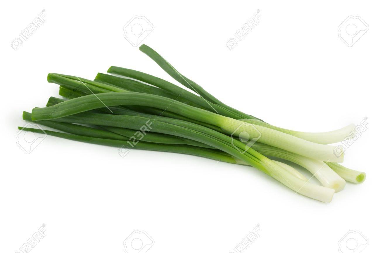 spring onion on a white background Standard-Bild - 15644166